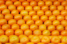 rows of clementines