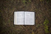 an open Bible on a forest floor