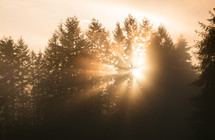 rays of sunlight through trees in a forest