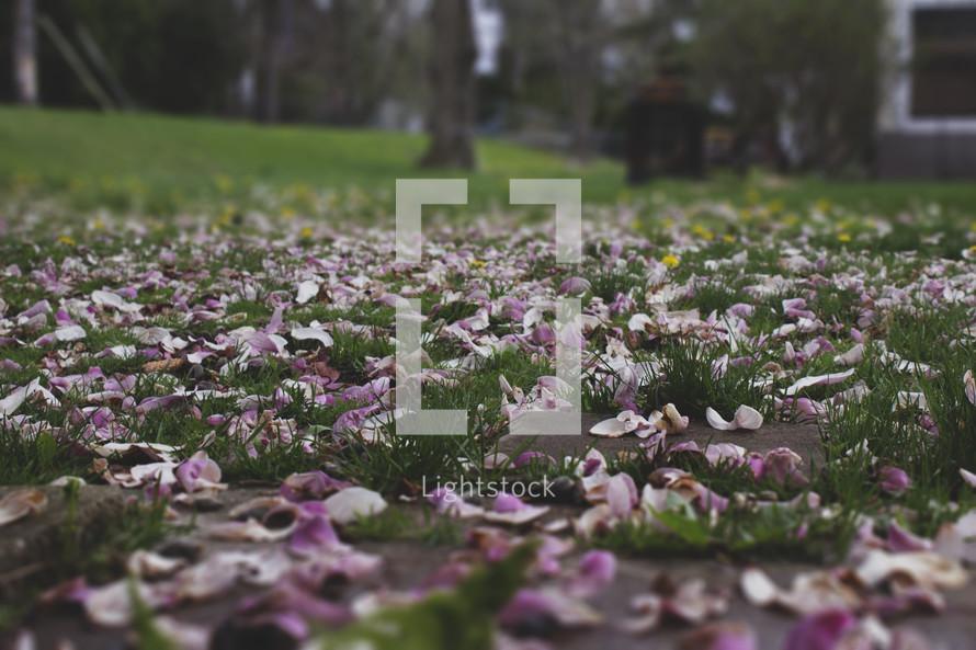 flower petals in grass