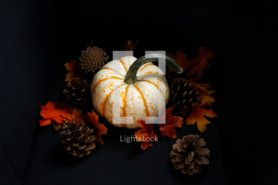 orange and white pumpkin on a black background with pine cones