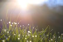 rain on green grass