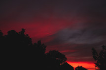 trees and red sky at sunset