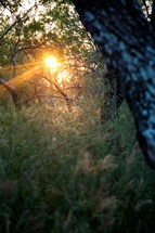 Sun beaming through forest trees