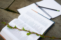 twig on the pages of a Bible and journal with pencil