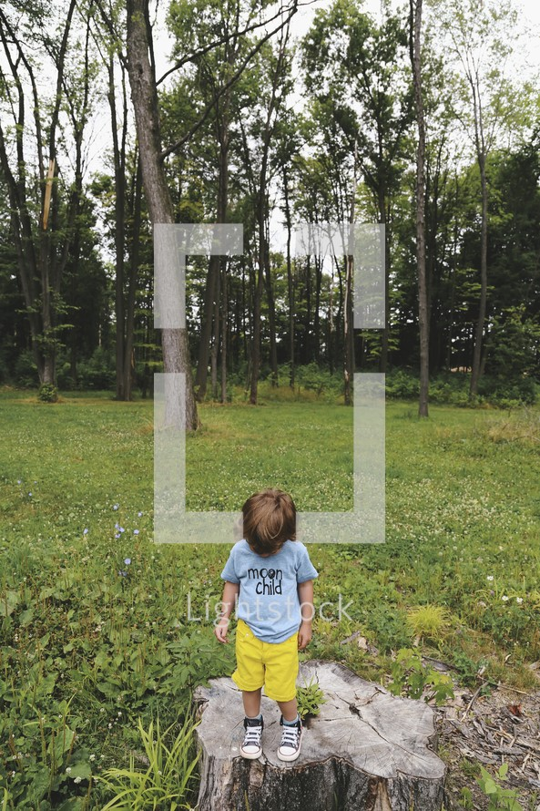 a toddler boy standing on a stump looking down at the ground