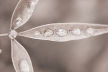 dew drops on a leaf