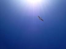 Bird soaring in sunny blue sky.