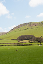 hillside with sheep grazing in field