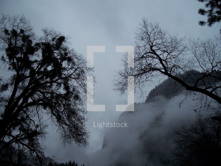 A thick fog bank shrouds the trees and mountains in February in Yosemite National Forest in Central California.