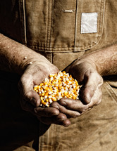 Farmer holding corn seed in cupped hands