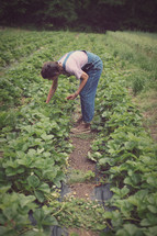 boy weeding garden