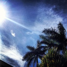 sunburst over the top of palm trees
