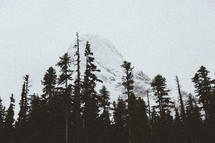 snow capped mountain peak and pine trees