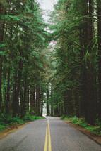 rural road through a pine forest