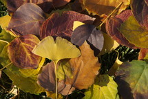 Purple and yellow leaves. Autumn, fall, season, harvest.