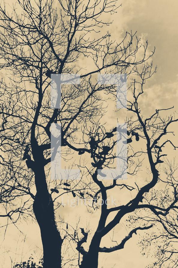dead, leafless tree