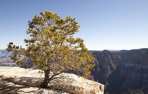 A tree growing from the rock on the edge of a cliff
