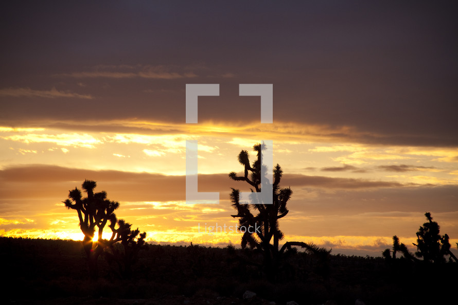 Silhouette of cactus at sunset.