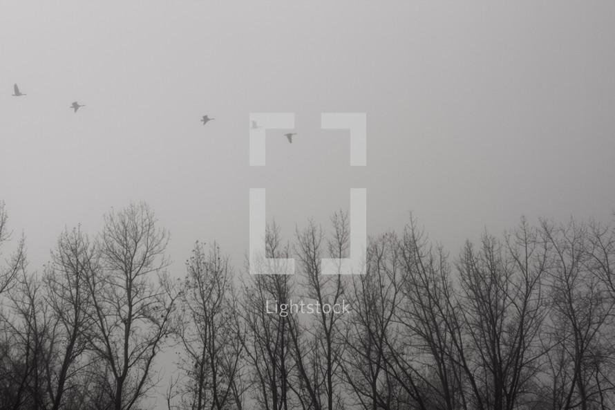 Birds flying over barren trees