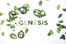 Geneis