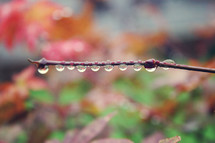 dew drops on a branch