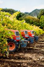 Orange Tractors in a vineyard napa valley fall harvest