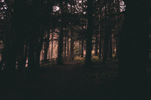 dimly lite forest