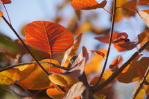 fall leaves on tree