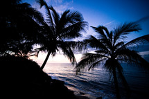 Palm trees by beach water