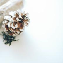 crisp winter pine cone