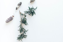 evergreen greenery branch and pine cone