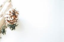 log, greenery, and pine cone