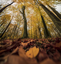 fall trees in a forest
