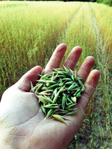 a hand full of grains
