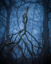 broken tree branch in a foggy forest