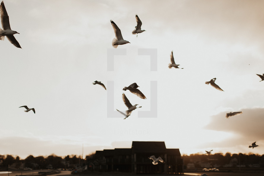 seagulls flying in the sky at sunset