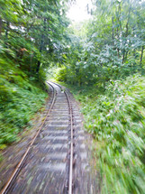 railroad tracks through a dense forest