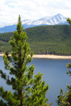 A pine tree with a lake and mountain in the distance