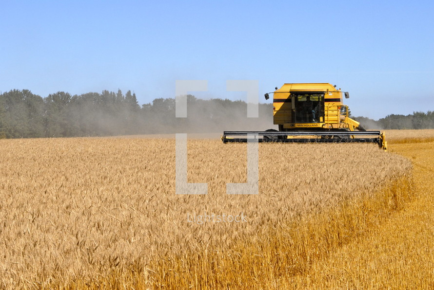 Combine harvesting a field of wheat. fall, season, seed,