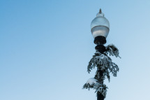 Snow-covered greenery on a streetlight.