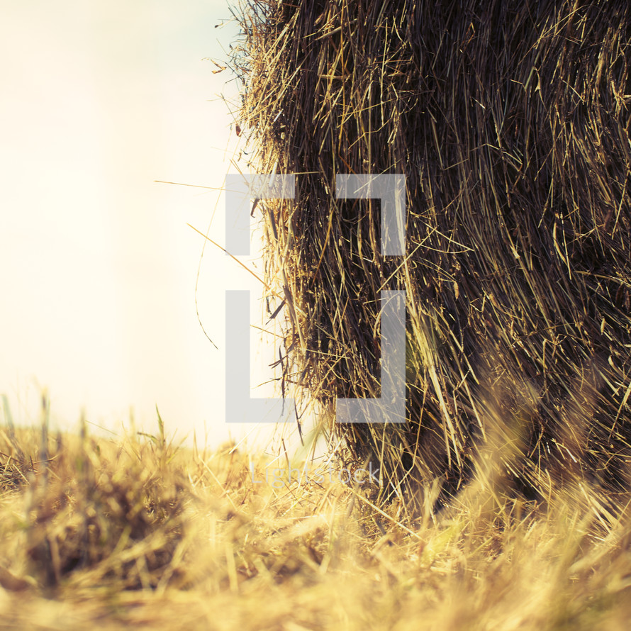 A hay bale in a field during harvest