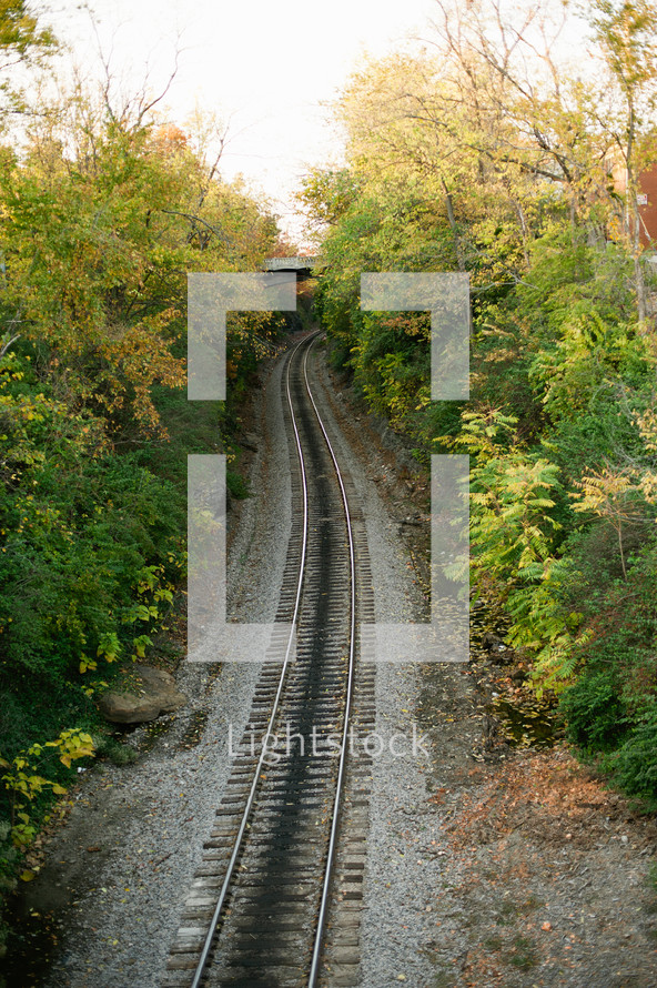 Train tracks in the woods