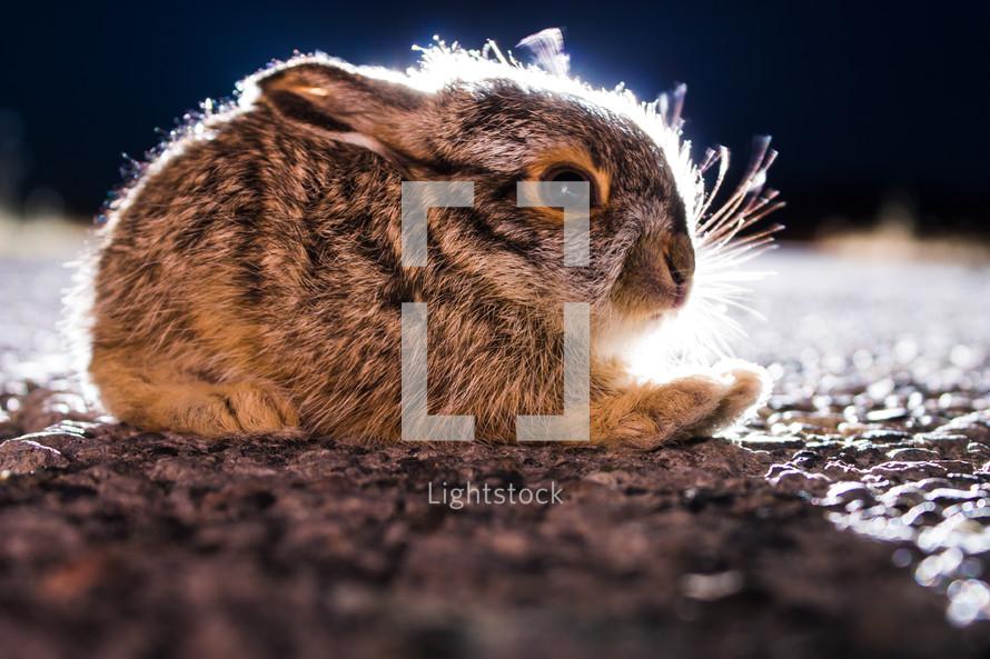 rabbit sitting on ground