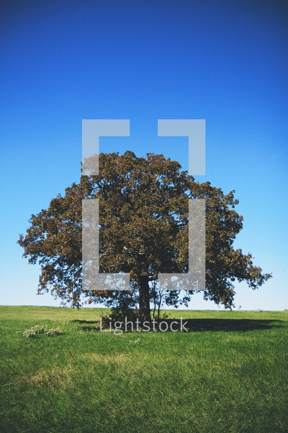 solo tree in a grassy field