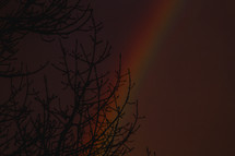 A budding tree against a rainbow in the glowing evening sky.