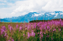 mountains and pink wildflowers