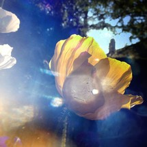 sunlight and a yellow flower