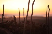 sticks on a beach