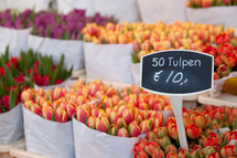 tulips in a market